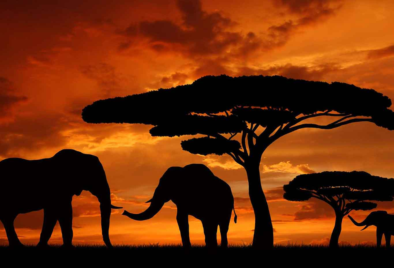 african migration map with Destinations Tanzania Serengeti National Park on All You Need To Know About Namibia additionally Great Migration in addition 369998925615676005 besides Destinations Tanzania Serengeti National Park further Art.