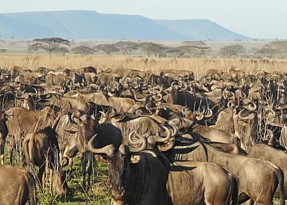 12 Days Tanzania Safari & Migration